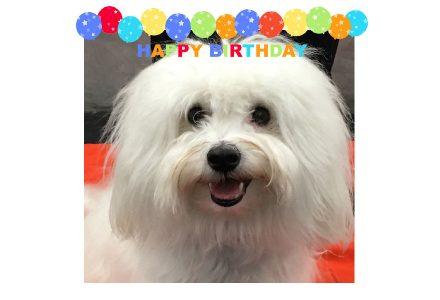 Today is Ammo's Birthday!